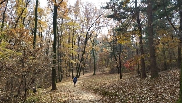 소나무와 낙엽의 하모니 가을 융건능